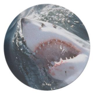 Gran tiburón blanco en el mar platos
