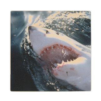 Gran tiburón blanco en el mar posavasos de arce