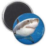 Gran tiburón blanco iman de frigorífico