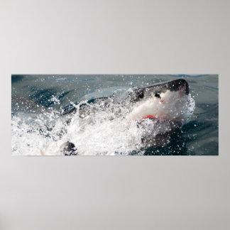 Gran tiburón blanco impresiones