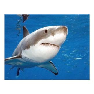 Gran tiburón blanco comunicados personales