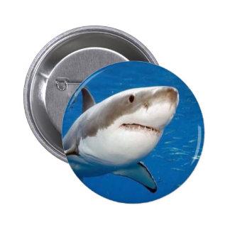 Gran tiburón blanco pin redondo de 2 pulgadas