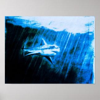 Gran tiburón blanco póster