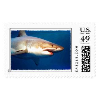 Gran tiburón blanco sellos