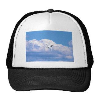 Gran vuelo blanco del egret en el cielo hermoso gorro