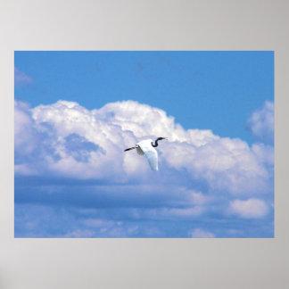 Gran vuelo blanco del egret en el cielo hermoso posters
