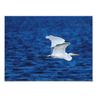 Gran vuelo del Egret Fotografía