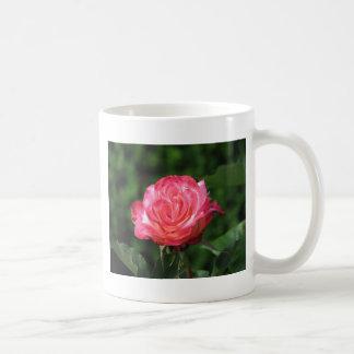 Granada 230 taza de café