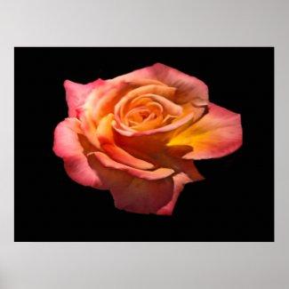 Granada Tea Rose Print print