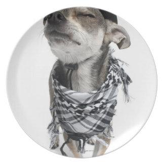 Granangular de una chihuahua con el suyo observa plato de comida