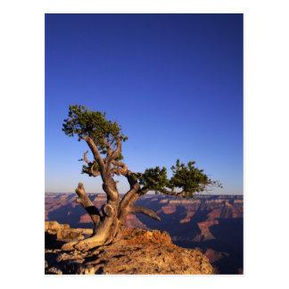 Grand Canyon, Arizona, USA Postcard