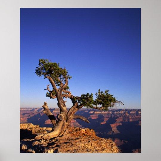 Grand Canyon, Arizona, USA Poster