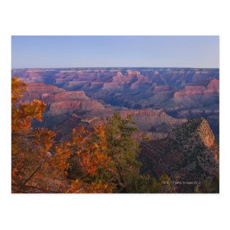 Grand Canyon at Sunrise Postcard