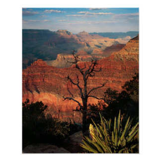 Grand Canyon Flora Poster