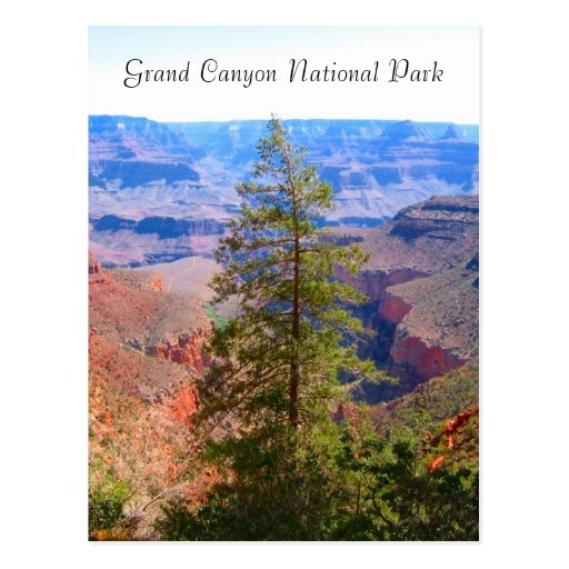 grand canyon high tree postcard