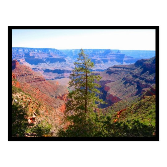 grand canyon tree border postcard