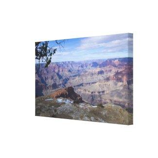 Grand Canyon Vista 3 wrappedcanvas