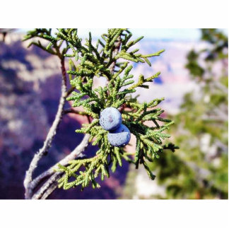 Grand Canyons Junipers Berry Berries Photo Sculpture