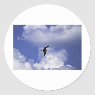 Grand Cayman Bird Classic Round Sticker