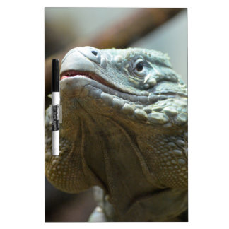 Grand Cayman Iguana Dry-Erase Board