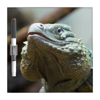 Grand Cayman Iguana Dry Erase Whiteboards