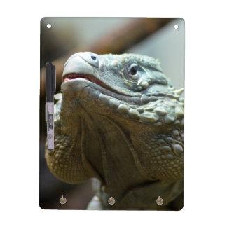 Grand Cayman Iguana Dry Erase Board
