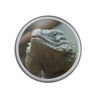 Grand Cayman Iguana Speaker
