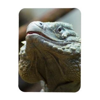 Grand Cayman Iguana Magnet