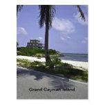 cayman, island, palm, tree, ocean, water, blue,