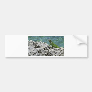 Grand Cayman Islands Green Iguana Bumper Sticker