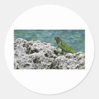 Grand Cayman Islands Green Iguana Classic Round Sticker