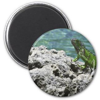 Grand Cayman Islands Green Iguana Magnet