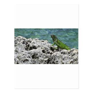 Grand Cayman Islands Green Iguana Postcard