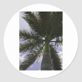 Grand Cayman Palm Classic Round Sticker