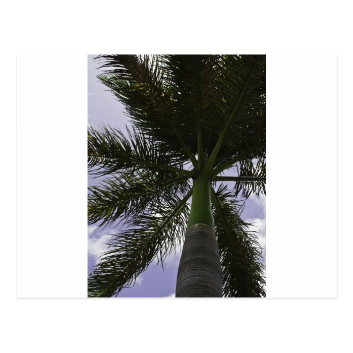 Grand Cayman Palm Postcard