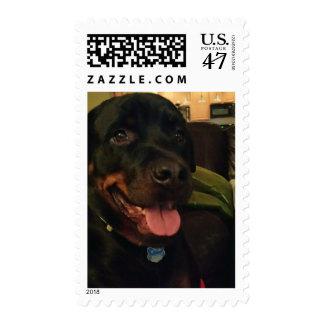 Grand Dog Postage