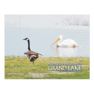 Grand Lake Oklahoma post card pelican3