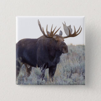 Grand Teton National Park, Bull Moose Button