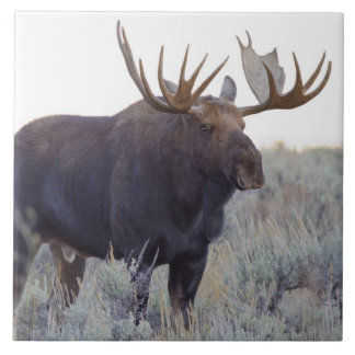 Grand Teton National Park, Bull Moose Ceramic Tile