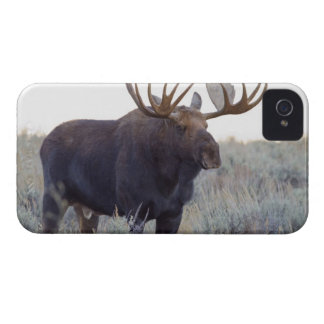 Grand Teton National Park, Bull Moose iPhone 4 Case-Mate Case
