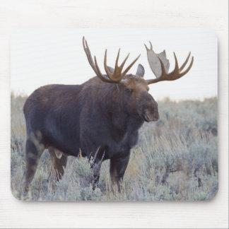 Grand Teton National Park, Bull Moose Mouse Pad