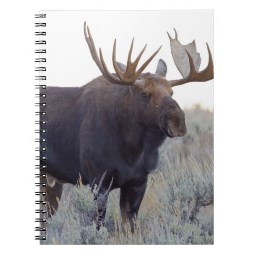 Grand Teton National Park, Bull Moose Notebook