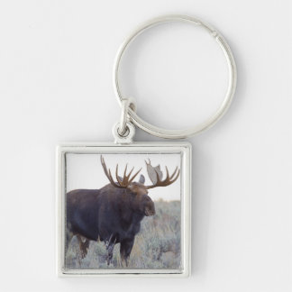 Grand Teton National Park, Bull Moose Silver-Colored Square Keychain