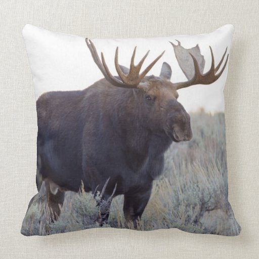 Grand Teton National Park, Bull Moose Throw Pillow Zazzle