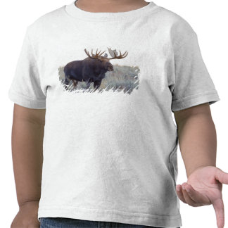 Grand Teton National Park Bull Moose Shirts