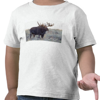 Grand Teton National Park Bull Moose Tee Shirt