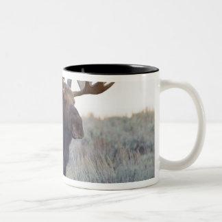 Grand Teton National Park, Bull Moose Two-Tone Coffee Mug