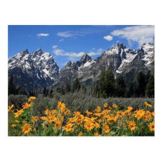 Grand Teton National Park Postcard