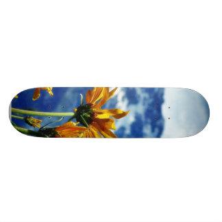 Grand Teton National Park Skateboards