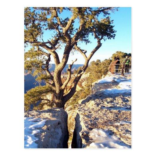 GrandCanyon-View#9 Postcard